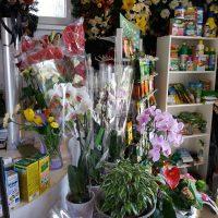 kvety_iveta_nz_hnojiva-4