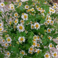 kvety_iveta_nz_rezane-1