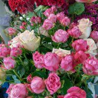 kvety_iveta_nz_rezane-10