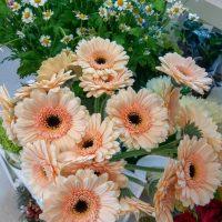 kvety_iveta_nz_rezane-2
