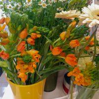 kvety_iveta_nz_rezane-3