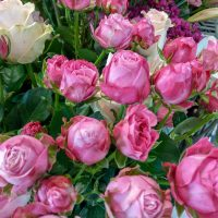 kvety_iveta_nz_rezane-5