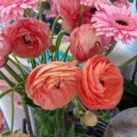 kvety_iveta_nz_rezane-6