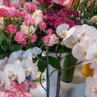 kvety_iveta_nz_rezane-7