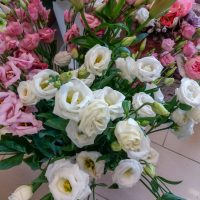 kvety_iveta_nz_rezane-9